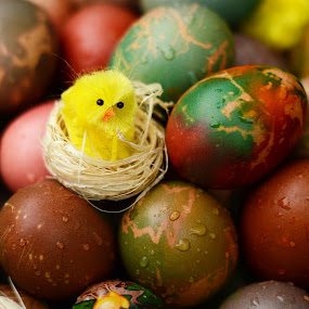 Easter Eggs by Lazarina Karaivanova - Food & Drink Eating ( egg )