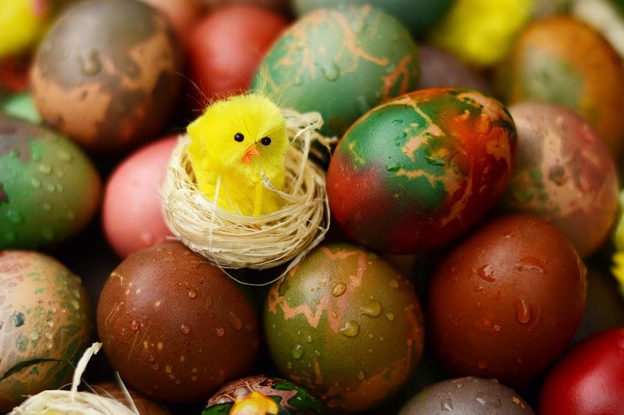 Easter Eggs by Lazarina Karaivanova - Food & Drink Eating ( egg )