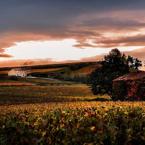 Vineyard by Ozge Kesim Yurtsever - Landscapes Prairies, Meadows & Fields ( vineyard, saint emilion, bordeaux, france,  )