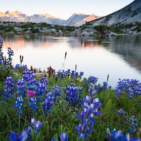 by Adam Collins - Landscapes Mountains & Hills ( wild flower, backpacking, wilderness, mountain, lake, john muir wilderness, pioneer basin )