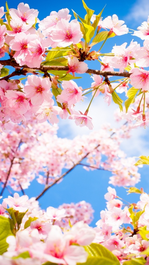 blossom chat Sunshine coasts blossom goodchild is a psychic medium, direct voice channeling spirit & cosmic energies if you would prefer to chat about something else.