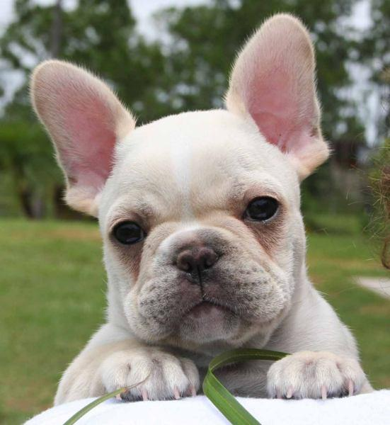 Cute Puppy Pictures - screenshot