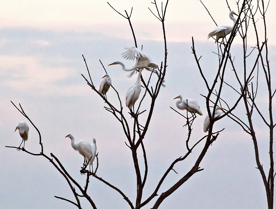 One Flying Away by Sue Matsunaga - Novices Only Wildlife