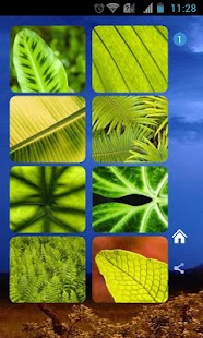 Green Leaves Theme - screenshot thumbnail