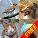 Animal Sounds (Bird,Dog,Cat) icon