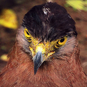 ANGRY ARE YOU???????????? by Shubhra Sau - Animals Birds ( , Selfie, self shot, portrait, self portrait )