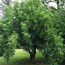 S6 Tree I.D. Training