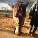 New Hair Style -Thai Horse