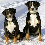 Puppies and Dogs 2 FREE