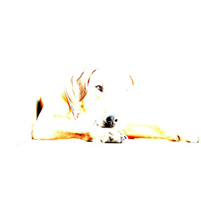 dog by Sarah Poirier - Novices Only Abstract ( dog rhodesian ridgeback abstract )