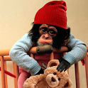 Baby Monkey Cute Wallpaper icon