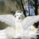 Angel Dog Live Wallpaper