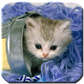 Kittens - HD Wallpapers icon