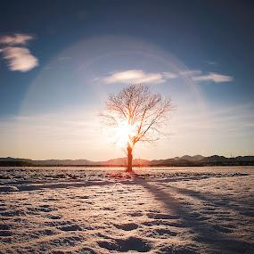 Tree under dome by Dominik Konjedic - Landscapes Sunsets & Sunrises ( field, tree, sunset, snow )