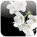 Lovely Sakura Live Wallpaper logo