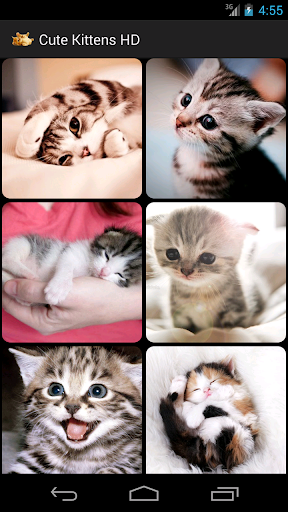 Cute Kittens HD