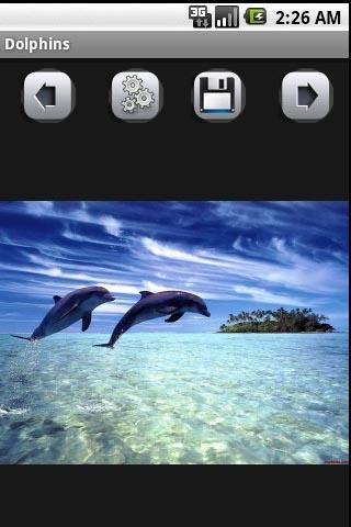 Dolphins - screenshot