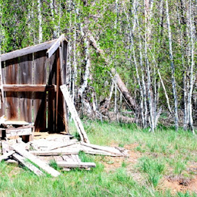 Outhouse by Nikki Kean - Buildings & Architecture Decaying & Abandoned ( cabin, urban exploration, outhouse, decaying, abandoned )