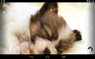 Screenshot of Q Dog Live Wallpaper
