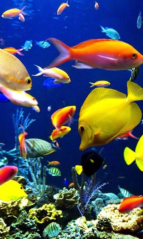 Wallpaper Aquarium Ikan Bergerak