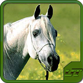 Horse Breeds & Pony Quiz HD