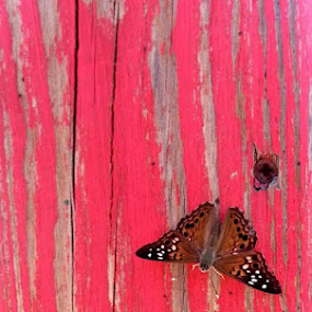 Butterfly by Sandra Fouty - Nature Up Close Other Natural Objects