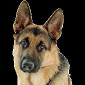Породы собак (Премиум)