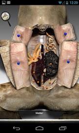 Froguts Frog Dissection Screenshot 7