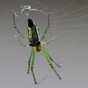 Large Jawed Spider - Decorative Leucauge