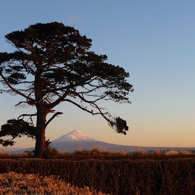 Country view by Kirsten Gamby - Landscapes Prairies, Meadows & Fields ( mountain view, early morning view, mt taranaki, rural view, tree and mountain,  )