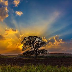 LP Sunset by Assi Dvilanski - Landscapes Sunsets & Sunrises ( clouds, field, sky, tree, sunsets, sunset )