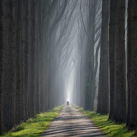 Damme by Helsen Eddy - Landscapes Forests