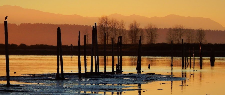 sunset over everett  by Lavonne Ripley - Landscapes Waterscapes