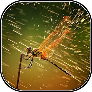 Happy Rainy season Live Wall for Android