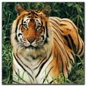 Animals jigsaw puzzle game icon