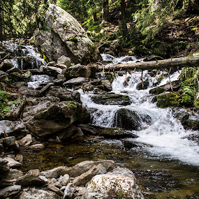 Flow by Suciu Corina - Landscapes Waterscapes ( water, grass, trees, forest, stones )