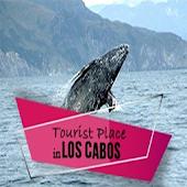 Cabo Tourist App | Brady Bunte