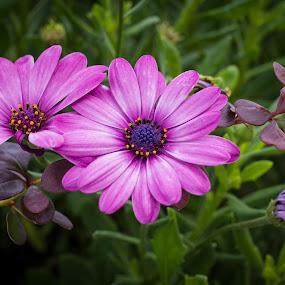 Flowers by Boris Romac - Flowers Flower Gardens ( k3, croatia, coguar, ricoh )