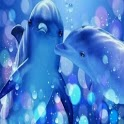 Magic Touch Dolphin Wallpaper icon