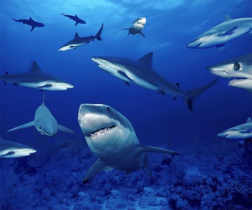 玩免費個人化APP 下載サメのライブ壁紙 app不用錢 硬是要APP