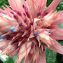 Urn Plant Flower, Silver Vase