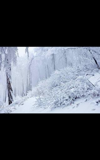 玩個人化App|Hd Images Snowfall Forest LWP免費|APP試玩
