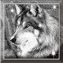 Wolf Free HD live wallpaper icon