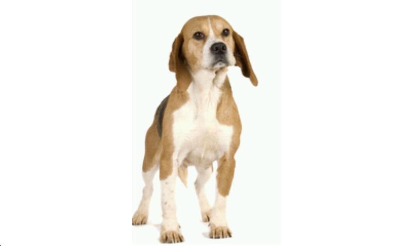 Perros.Todas las razas y fotos- screenshot