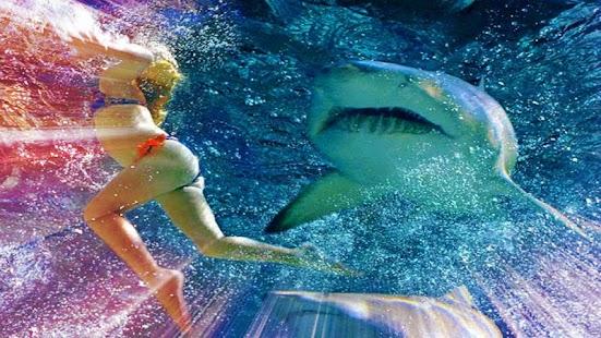 Shark Hunt Return