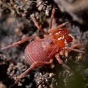 unknown arachnid