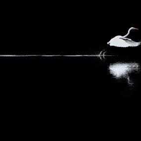 Long start-up by Kai Süselbeck - Black & White Animals ( bird, stork, solingen, legs, start-up )