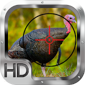 Wild Turkey Hunting Gold Pro
