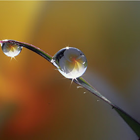 :: on GRASS :: by Dedy Haryanto - Nature Up Close Natural Waterdrops