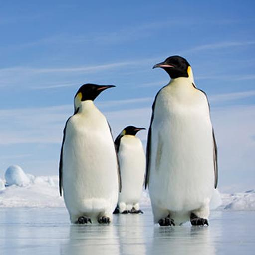 essay about pinguins